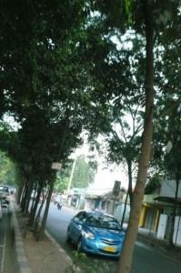 pohon-pohon yang terjepit di pulau jalan