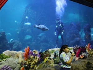 Ayah Vay muncul saat pengunjung bersiap2 menunggu acara pemberian makan ikan. So, pengunjung mengira doi adalah penyelam Sea World.