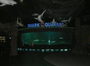 Shark Aquarium, khusus hiu-hiu besar dan ganas. Kalo yang kecil2 ada di Touch Pool dan ada juga di Kolam Utama. Tp yg ganas2 di sini.