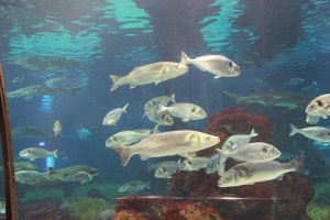 aquarium d barcelona