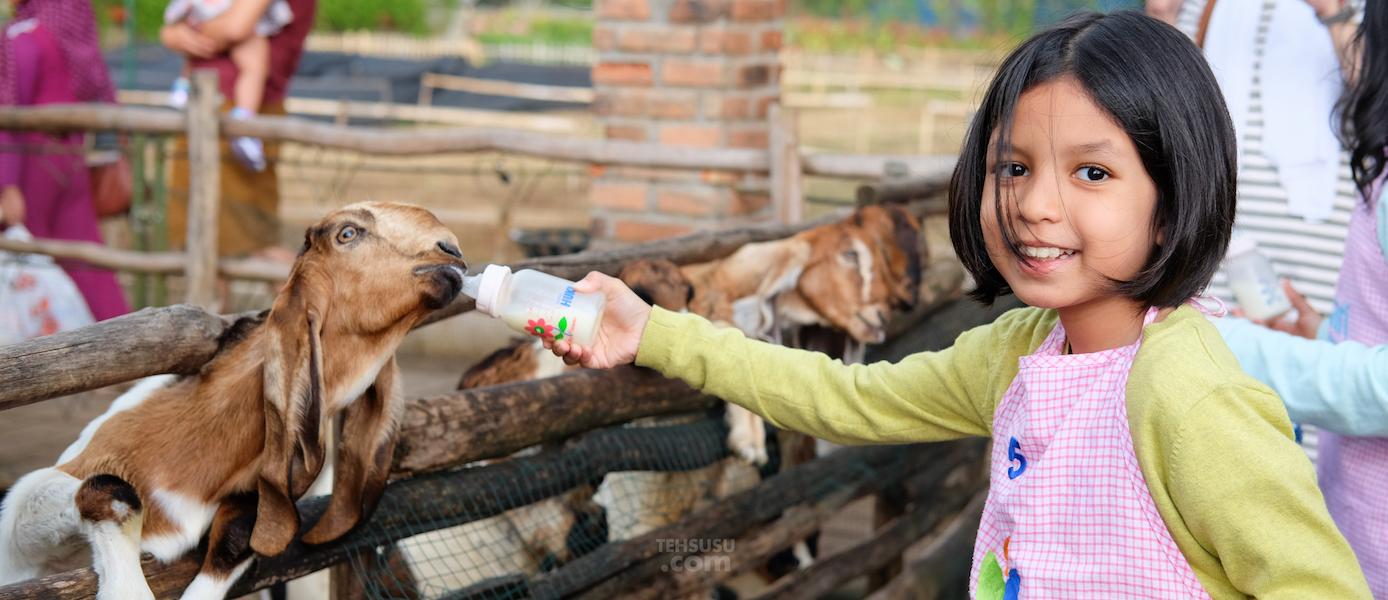 Lactasari Mini Farm, PVJ - Bandung