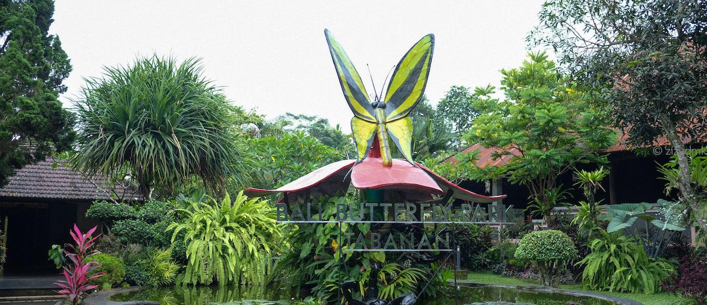 [Bali Trip] Kepompong Emas di Bali Butterfly Park