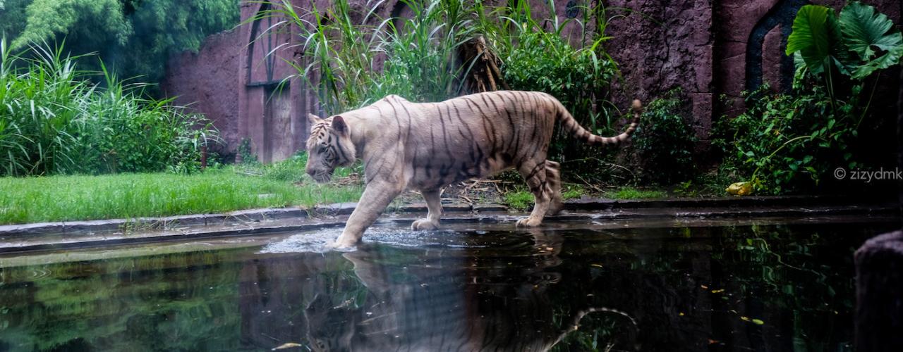 [Bali Trip] 6 Hal Yang Berkesan di Bali Night Safari