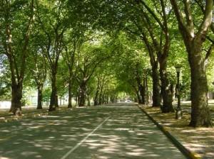 coba jalan-jalan di tengah kota seperti ini ya..