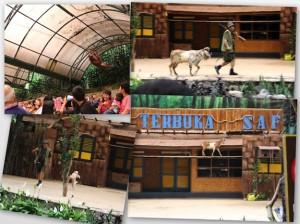 Panggung Terbuka Safari: wajib tonton nih!