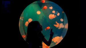 SeaWorld Ancol