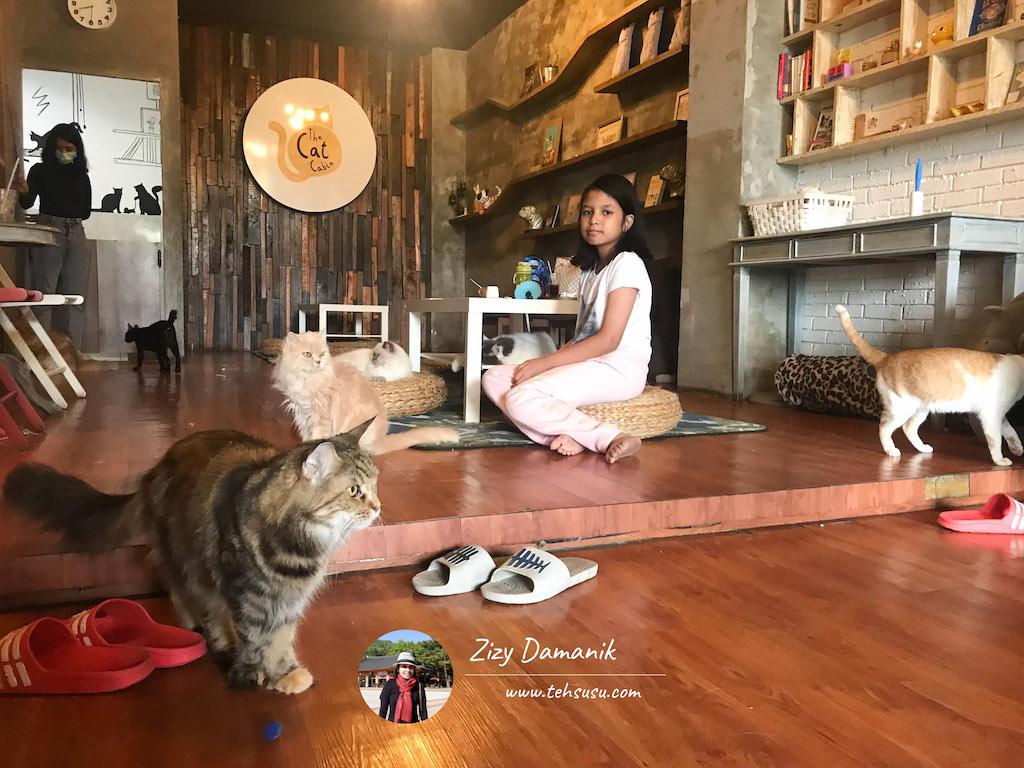 Pecinta Kucing Harus Main ke The Cat Cabin Jakarta