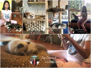 The Cat Cabin