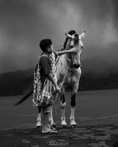 Foto Hitam Putih Kuda di Bromo