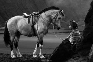 Horse Black and White Photography