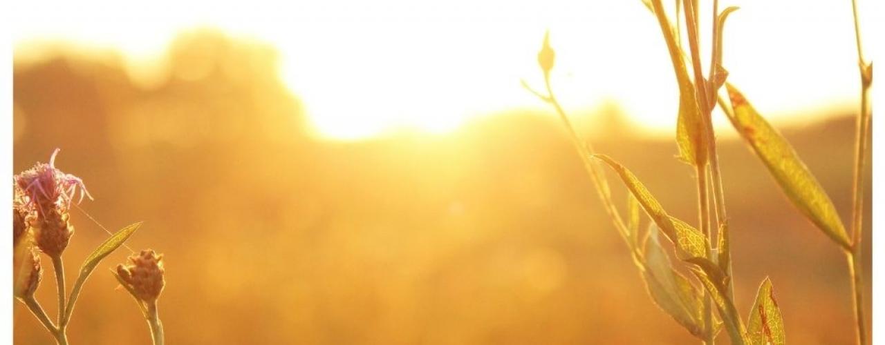 Memulai Hari yang Positif dengan 3 Penyesuaian Rutinitas Pagi
