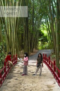 bamboo forest di the hill sibolangit