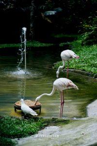 flamingo di the hill sibolangit
