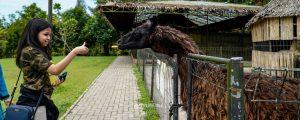 kebun binatang mini di the hill sibolangit