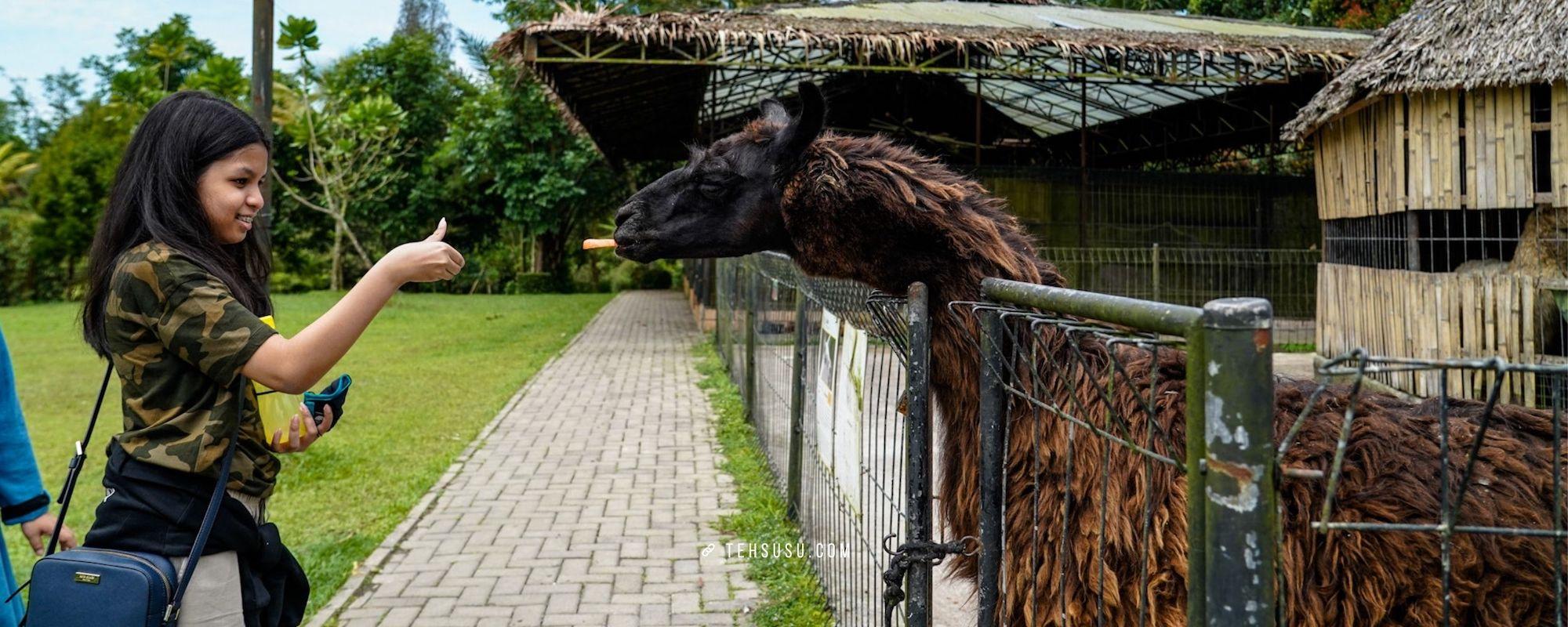 Mengunjungi Kebun Binatang Mini di The Hill Hotel dan Resort Sibolangit