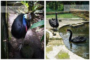 mini zoo di the hill sibolangit