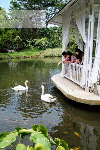 swan lake di the hill sibolangit